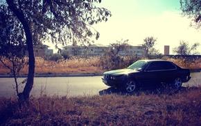 Picture machine, autumn, grass, sunset, tree, bmw, BMW