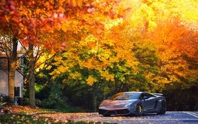 Picture autumn, trees, Lamborghini, Superleggera, Gallardo, LP570-4