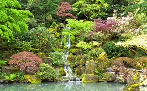 Picture trees, pond, stones, waterfall, moss, garden, the bushes