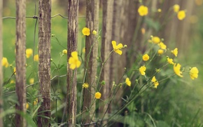 Picture macro, flowers, yellow, nature, the fence, plants, fence