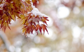Picture autumn, leaves, snow
