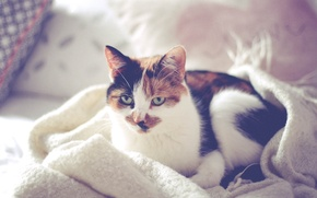 Picture cat, bed, pillow, blanket