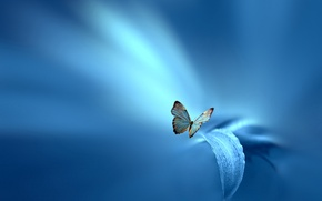 Picture flower, sheet, style, background, blue, butterfly, Josep Sumalla