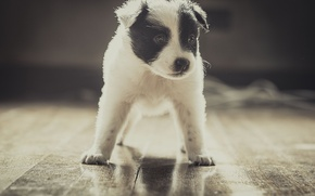 Picture each, dog, puppy, stand
