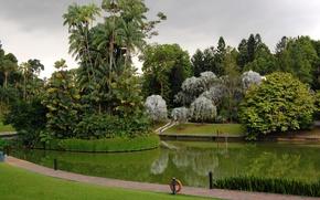 Picture grass, trees, design, pond, Park, palm trees, lawn, Singapore, Botanic Gardens