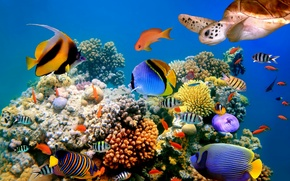 Picture fish, nature, turtle, the bottom of the sea, fish, turtle, the nature, the sea bottom