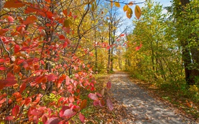 Picture autumn, leaves, trees, Park, track, the crimson