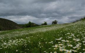 Wallpaper beautiful, field, daisies