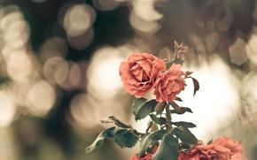 Picture flower, leaves, macro, flowers, background, widescreen, Wallpaper, blur, wallpaper, leaves, flower, widescreen, flowers, background, macro, …