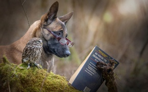 Picture owl, dog, book, friends, reading