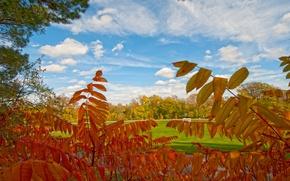 Picture autumn, leaves, trees, Park, the crimson