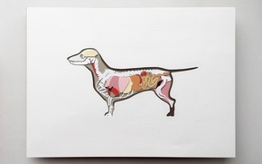 Picture Dog, Abstraction, Art, Bodies