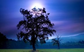 Picture field, the sky, leaves, the sun, trees, landscape, author, Janek Sedlar