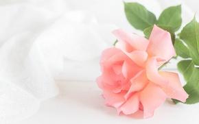 Wallpaper tenderness, pink, rose