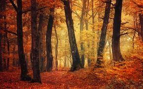 Wallpaper trail, autumn's palette, fog, autumn, fall, woodland, autumn colors, fall colors, foliage