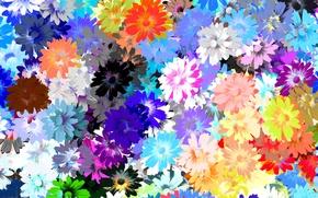 Picture collage, carpet, petals