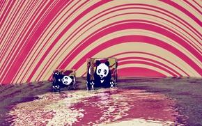 Picture water, Panda, acid