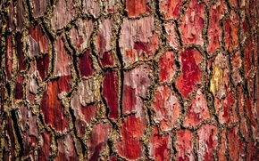 Picture background, tree, bark
