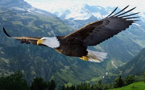 Picture mountains, paint, Eagle