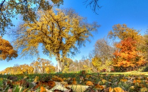 Picture the sky, grass, autumn, trees, leaves