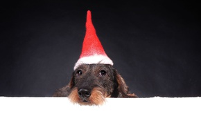 Picture face, background, holiday, new year, portrait, Christmas, dog, puppy, image, Santa Claus, Santa, cap