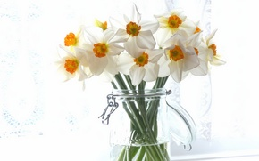 Picture bouquet, Bank, daffodils
