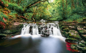 Picture forest, trees, stream, stones, waterfall, moss, UK, Wales, Brecon Beacons National Park