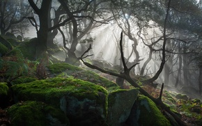 Picture light, trees, stones, moss, the sun's rays