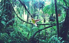 Picture nature, photoshop, Hummingbird