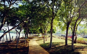 Picture green, trees, nature, park, leaves, evening, walk, nice, magnificent