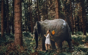 Picture forest, girl, elephant