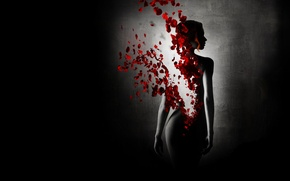 Picture girl, Black background, dissolution, rose petals, reincarnation