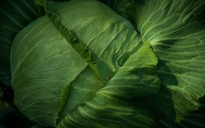 Picture greens, leaves, cabbage