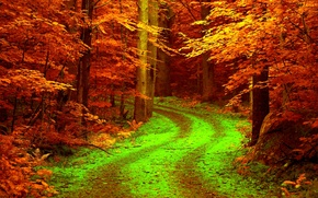 Picture road, autumn, forest, leaves