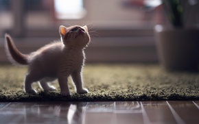 Picture cat, kitty, © Ben Torode, Hannah