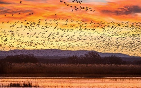 Picture sunset, birds, lake, hills