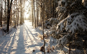 Picture winter, snow, Wisconsin, United States, winter, Phillips, Northern Woods, Phillips, Wisconsin