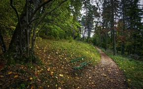 Picture Park, tree, track, bench