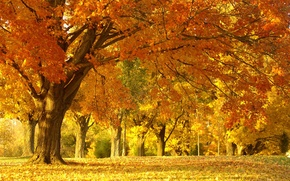 Wallpaper beauty, Park, nature, trees, foliage, landscape, autumn, forest