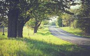 Picture road, greens, grass, trees, mood, foliage