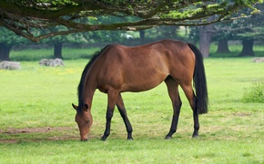 Picture animals, grass, trees, tree, horse, horse, horses, horse, pasture