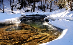 Picture forest, snow, trees, river, stream, spring