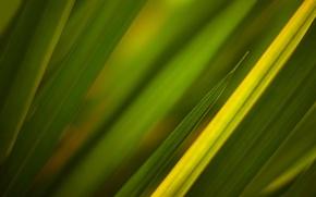 Wallpaper grass, green textures, green, texture