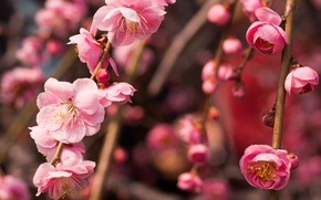 Picture macro, branches, tree, pink, spring, flowering, drain