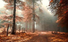 Picture fog, road, autumn, fence, forest