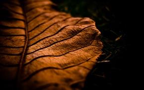 Picture autumn, macro, sheet, autumn, macro leaf