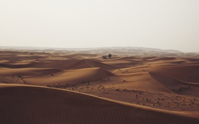 Picture desert, trees, nature, hills, sand