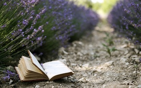 Picture flowers, background, book, lavender