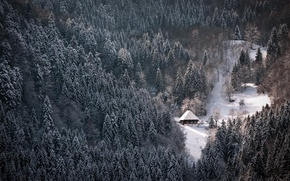 Picture winter, forest, snow, Nature, house