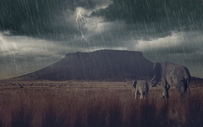 Picture the storm, rain, zipper, mountain, Savannah, cub, elephants, elephant